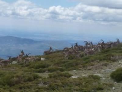 Cuerda Larga - Miraflores de la Sierra; grupos de trekking informacion sobre el tejo mochila para tr